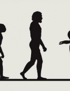 EVOLUCAR